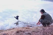Pavel Moulis je na snímku zachycen právě při vypouštění vyléčené lysky černé zpět do volné přírody.
