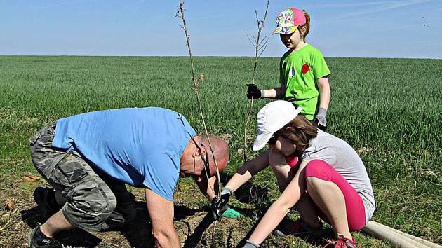 Brigádníci vysázeli nové stromky u Svinné.