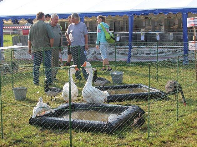Výstava chovatelů ve Volduchách
