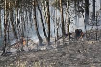 Oheň ničil les na Pavlovsku.