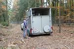 Čtveřice ročních hřebečků přicestovala z Milovic v přívěsu.