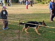 Přehlídky německých ovčáků se úžastnilo na sto padesát psů.