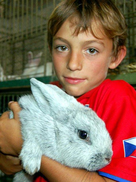 Devítiletý Vašek Hrabák z Kařezu se radoval při víkendové výstavě drobného zvířectva. Posuzovatelé mu přiřkli jednu z čestných cen v kategorii králíků.