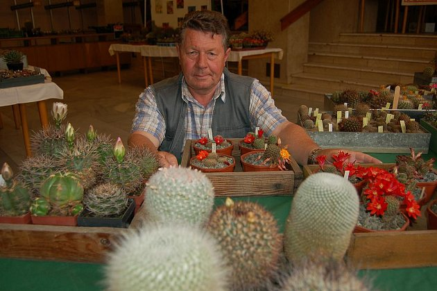 Milan Škollar, předseda Klubu kaktusářů Rokycany, se svému koníčku věnuje už čtyřicet let. Na snímku je s částí svých miláčků na výstavě, jež se do zítřka koná v rokycanské sokolovně.