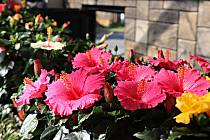 Pestrá přehlídka krásných květů je ještě dnes k vidění v Radnicích