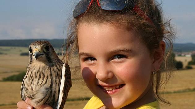 Markéta Moulisová z rokycanské stanice pomáhá nejen s péčí o zraněná zvířátka, ale i při samotném návratu opeřenců zpět do volné přírody.