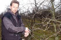 MIROSLAV VESELÝ, mechanizátor a traktorista ve vranovských ovocných plantážích, se zapojil v těchto dnech do stříhání jabloní.