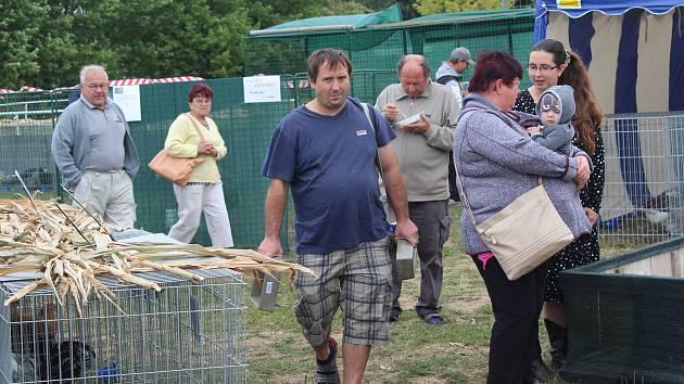 Návštěvníci chovatelské výstavy měli ve Volduchách co obdivovat.