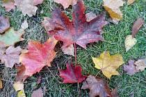 Barvy podzimu na Rokycansku.