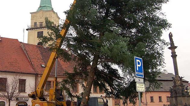 V Rokycanech ve středu stavěli zaměstnanci Rumpoldu vánoční strom a na Masarykově náměstí je sledovaly desítky lidí. Patnáct metrů vysoká jedle  byla uříznuta v polesí Čilina a stane se opět symbolem nadcházejících svátků.