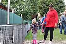 Výstava chovatelů drobného zvířectva.