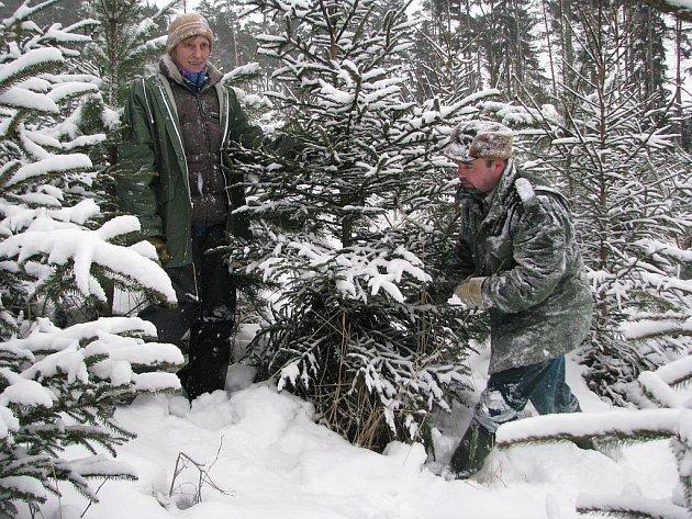 Řezání vánočních stromků provázejí  nesnáze. Těžko se k nim  lze dostat a lámou se. Ačkoli se nám do objektivu hajný Jaroslav Kadlec a Vladimíra Strnadová usmáli, jinak k tomu moc důvodů nebylo.