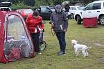 Výstavě psů v Rokycanech počasí nepřálo...