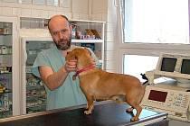 V rokycanské veterinární ošetřovně se Luděk Uzel nejčastěji věnuje psům, kočkám a různým dalším domácím mazlíčkům.