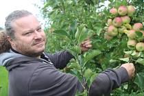 Sadaři na severu Rokycanska sklidili letní odrůdy jablek.
