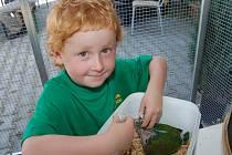 OBROVSKÝM LÁKADLEM pro malé i velké návštěvníky voldušské expozice bylo ruční krmení exotických opeřenců. V rukou malého Matýska Kesnera se téměř ztrácel i tenhle malinký amazoňan, z něhož ale také vyroste nádherně zbarvený papoušek.