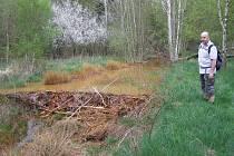 Turisté mohou na Díreckém potoce plném železa obdivovat i bobří hráze, mohl by na ně ale spadnout nahlodaný strom. Kousek nad hrází, kolem kyzového jezírka, jsou stromy pořádně zdecimované.