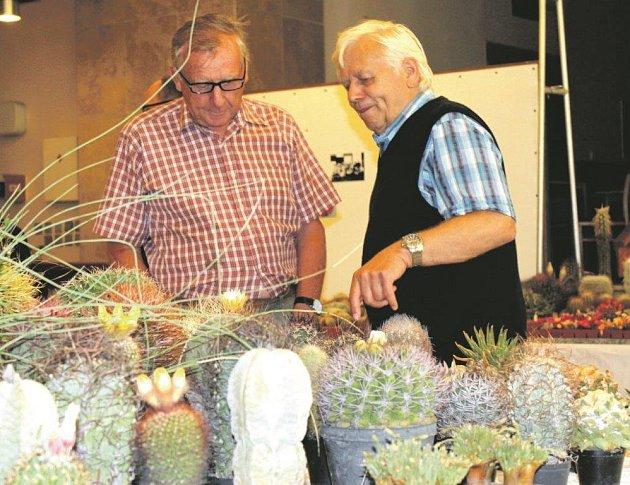 Zvýstavy kaktusů