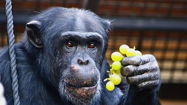 Přijďte 27. června na Den pro rodiny s dětmi do Zoo Dvorec.