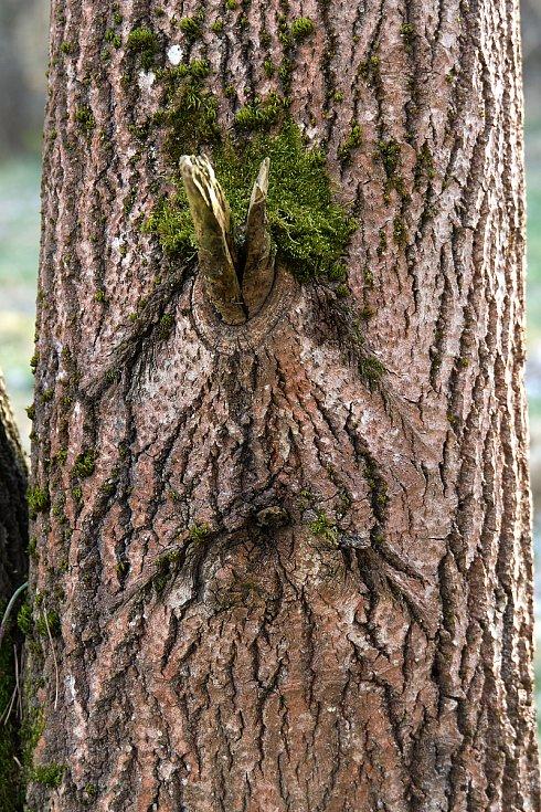 Duch stromový 14 - bývalý jednorožec