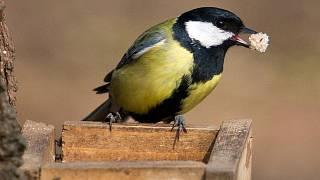 Jak velký by měl být tvůj pták