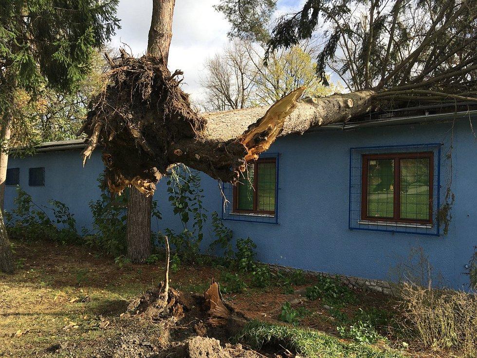 Na loděnici u Malše mezi Velkým a Malým jezem spadl kvůli větru strom.