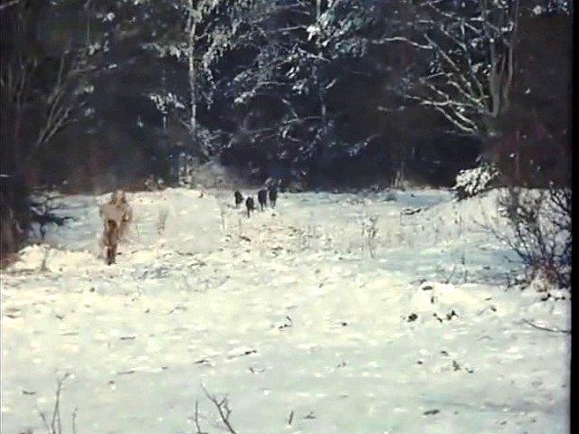 Specialista právě vypustil psy z lesa. Před nimi se po sněhu smýká Gábina Osvaldová (malá postava vlevo) s malou ovcí v náručí.