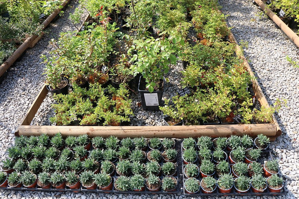Nově otevřené Zahradnictví Alex v Litvínovicích.