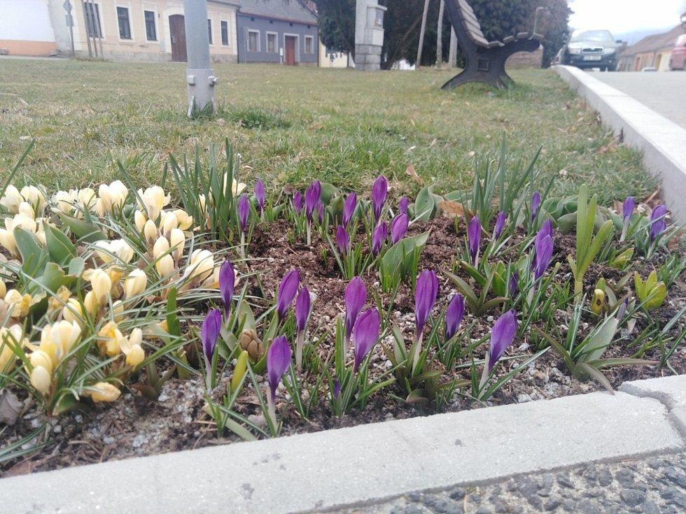 Květy a jiná jarní výzdoba na jihu Čech. Ločenice.