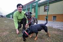 V českobudějovickém městském útulku čeká na nového páníčka 12 psů.