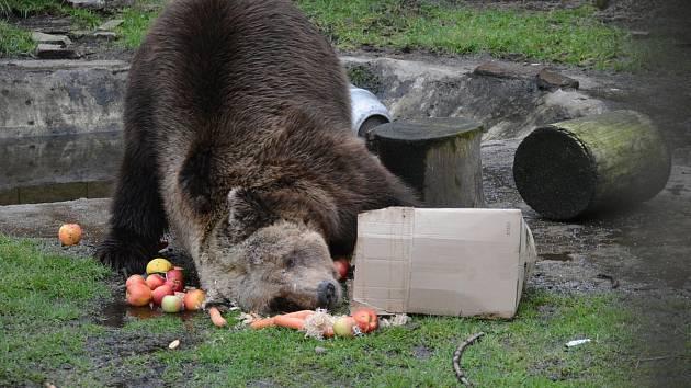 Štědrý den si užijete vy i zvířátka v zoo Dvorec.