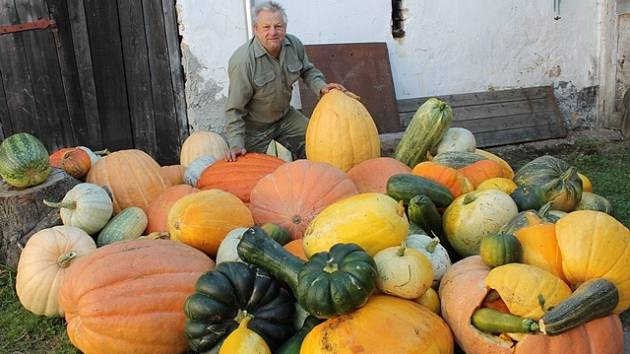 Jan Pinc z Hrůtova letos na své zahradě sklidil na čtyři stovky tykví. Většina z nich ale pomrzla.