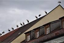 Invaze čápů k sousedům.
