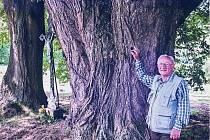 Lípy u Doubravky byly jako vítězné stromy z Jihočeského kraje nominovány v roce 2014 do finále ankety Strom roku. Na snímku spolunavrhovatel účasti lip František Landa.