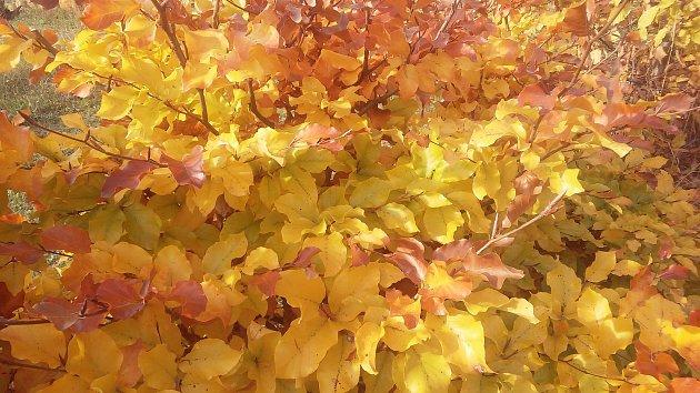 Hlavně ve středu 15. listopadu má být slunečno.