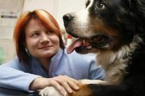 """Nejčastěji ošetřuje veterinářka Lucie Míková psy a kočky, ale výjimkou nejsou ani morčata či plazi. """"Na téhle práci jsou nejlepší právě ta zvířata,"""" říká. Na snímku při vyšetřování feny bernského salašnického psa Bely."""