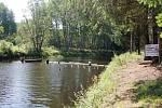 Zábrany mají znesnadnit tah kaprovitých ryb do horní Vltavy a ochránit tak populaci pstruha a nepřímo hlavně perlorodku.