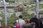 Tématem Dne zvířat v Zoo Hluboká byli ptáci. Návštěvníci se dozvěděli o jejich ochraně, migraci i jak je ohrožují domy a zahrady.