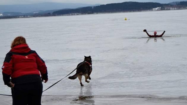 Začátkem února členové brigády trénovali na nesouvisle zamrzlém Lipně. Pes musel přes ledovou vodu, kry a praskající led donést záchranné lano daleko vzdálenému figurantovi ve vysekané díře.