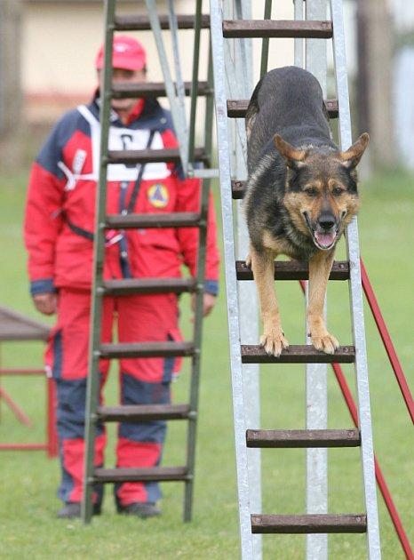 Mistrovství České republiky záchranných psů hostila o víkendu Horní Stropnice.