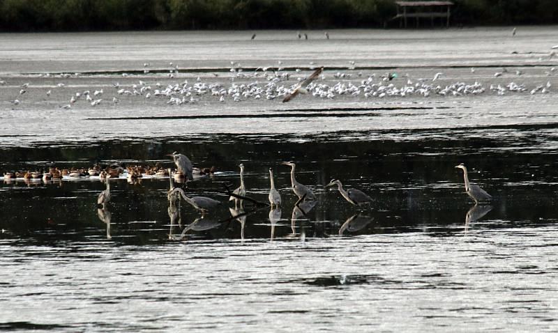 Výlov rybníka Naděje u Hluboké nad Vltavou