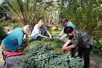 Májová zahrada, rozpočet 2,216 milionu. Eva Hejduková chce vybudovat městskou komunitní přírodní zahradu na sídlišti Máj. Ta by se měla stát místem pro relaxaci, aktivní odpočinek, dobrovolnickou práci, edukaci dospělých i dětí všech věkových skupin.
