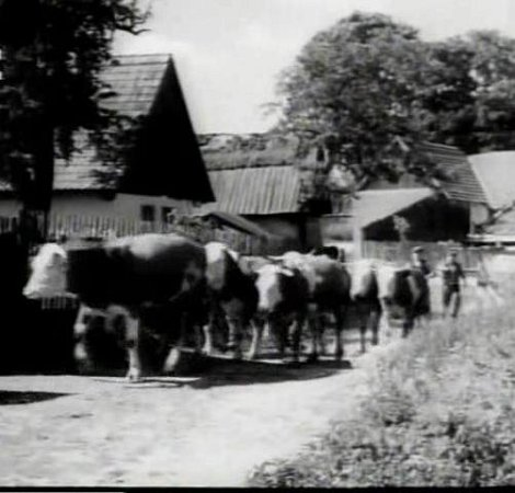Naštvaní sedláci ženou přes vesnici stádo dobytka, aby se napil zrybníka statkáře Bervidy. Místní chalupy lidé ve filmu poznávají.