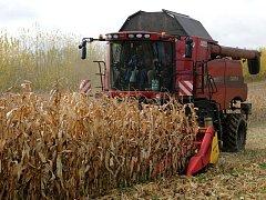 Sklizeň kukuřice - ilustrační foto.