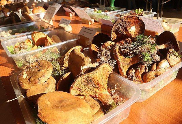 Výstava hub v Jihočeském muzeu v Českých Budějovicích
