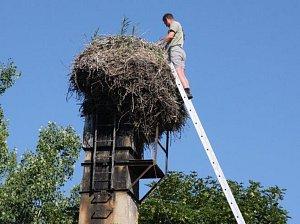 Kontrola čapích hnízd. Ilustrační foto.