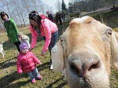 Prohlídku farmy, tvoření velikonočních dekorací nebo ukázky dojení a výroby sýra nabídl Jarní festival na Borovanském mlýně. Akce byla oficiálním zahájením sezony.