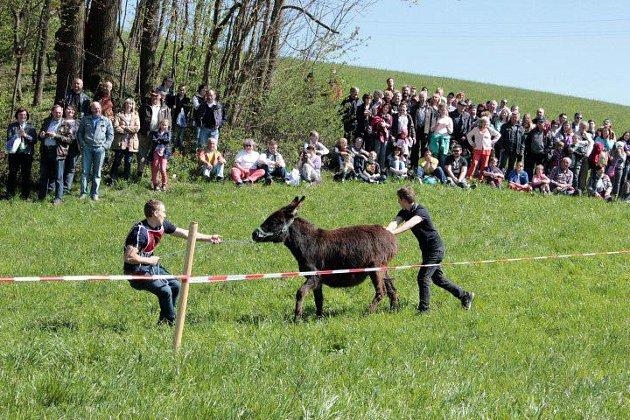 Osli závodili u sousedů.