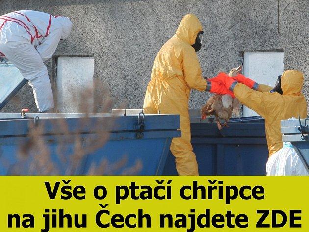 Téma ptačí chřipka na jihu Čech.