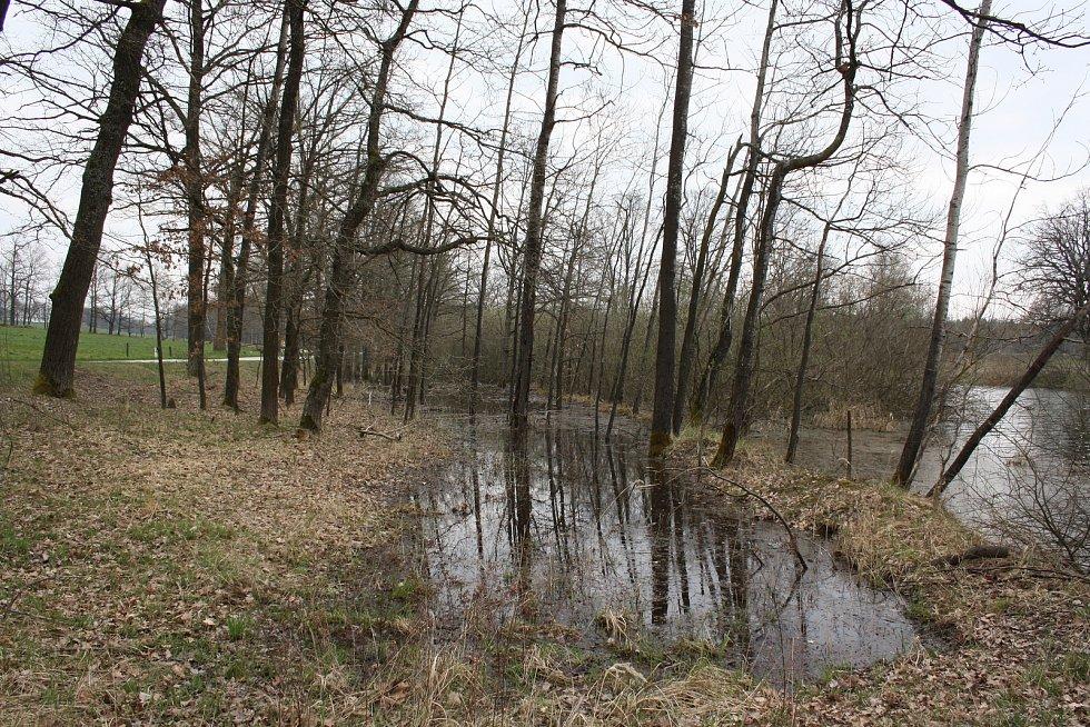 Žárský rybník.